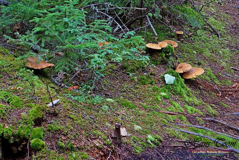 Chignecto National Wildlife Area 2724