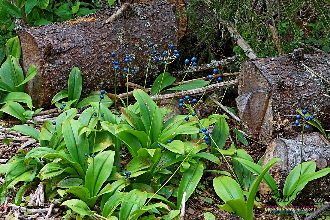 Chignecto National Wildlife Area 2729