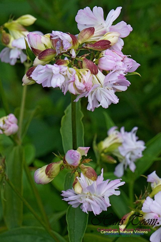 Flower 2701