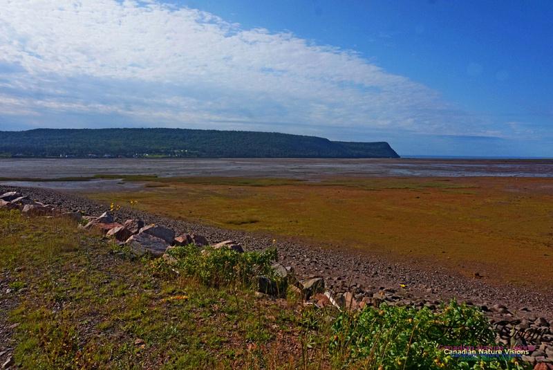 Acadian Dyke 2801