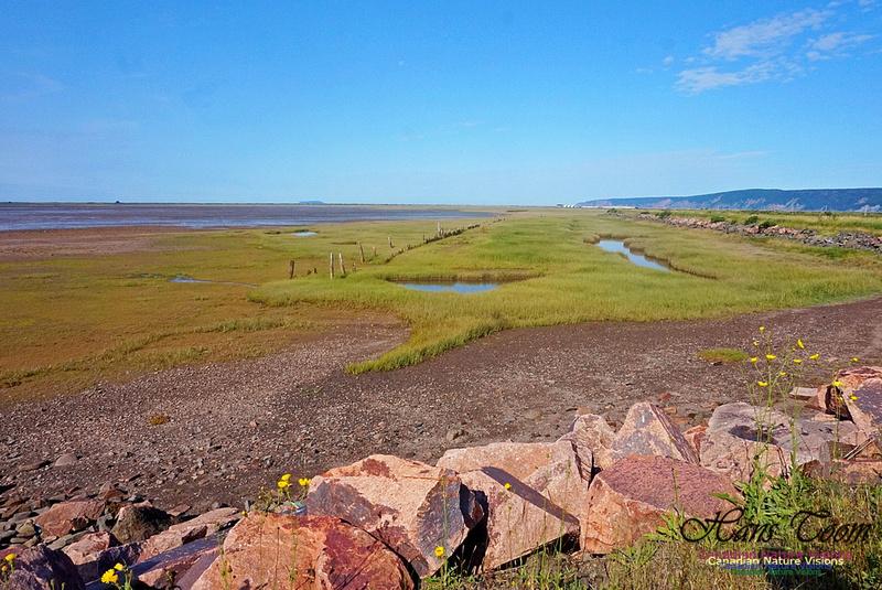 Acadian Dyke 2803