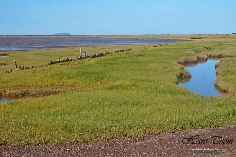 Acadian Dyke 2804