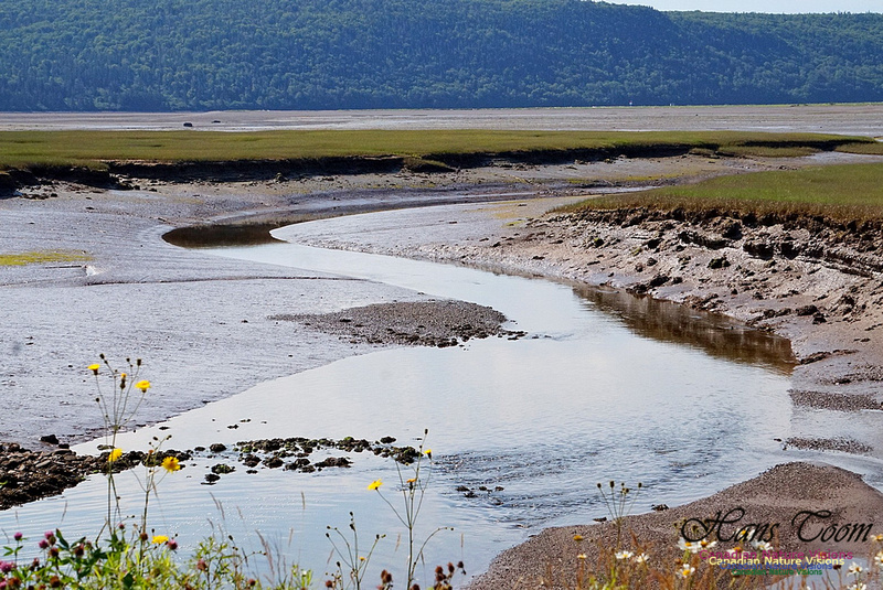 Acadian Dyke 2806