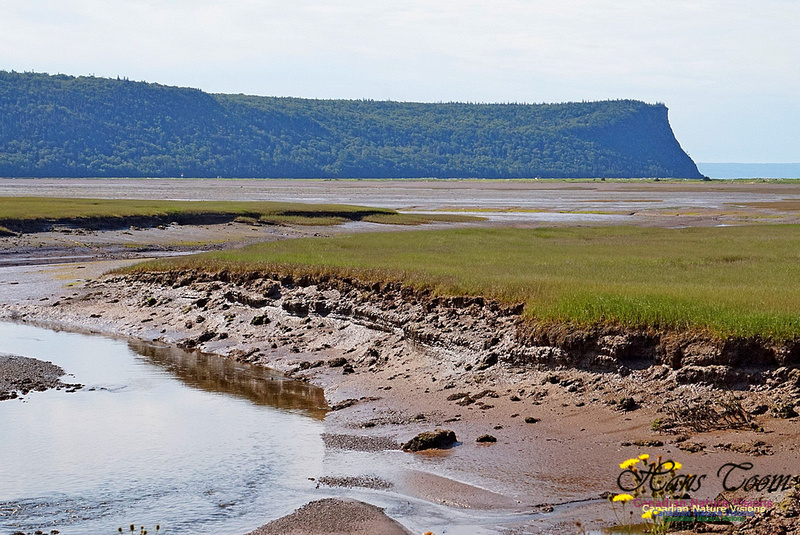 Acadian Dyke 2807