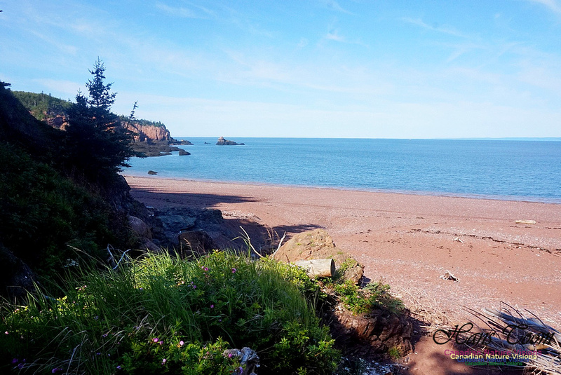 Anerson's Cove Hike 2903