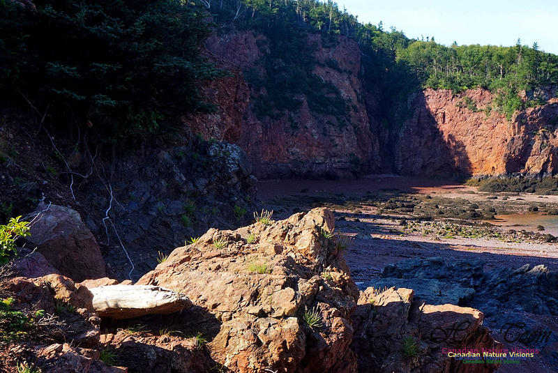 Anerson's Cove Hike 2909