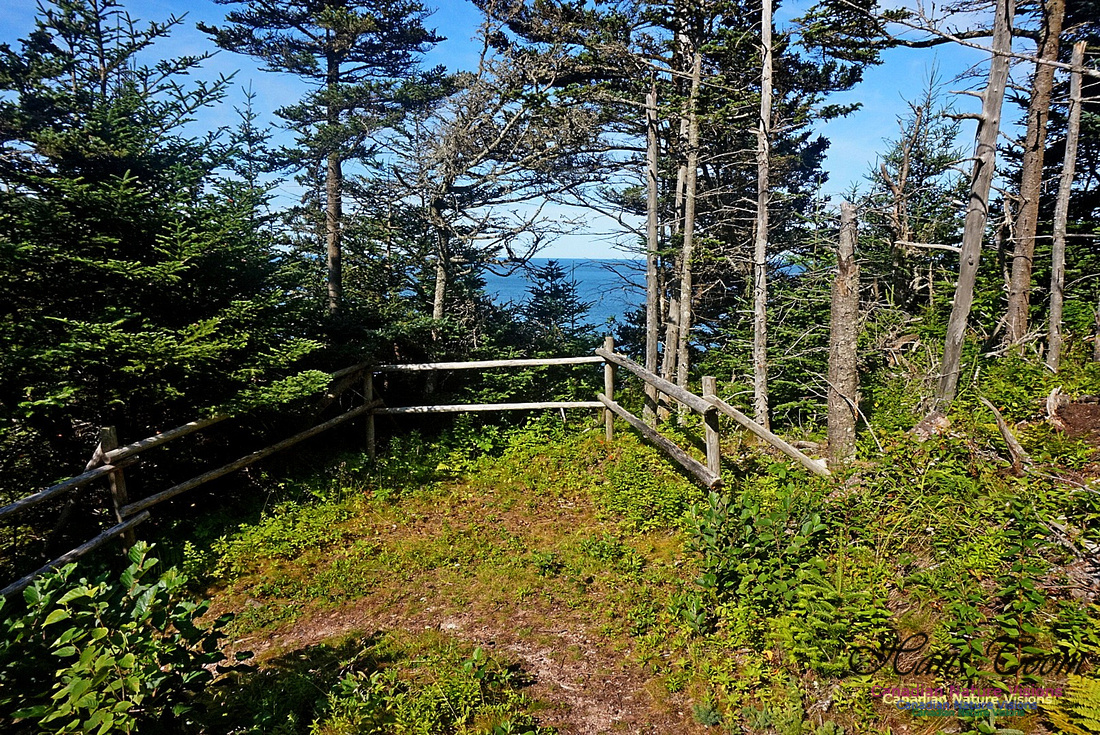 Anderson's Cove Hike 2902