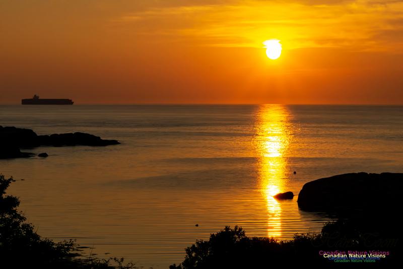 Sunrise 1000