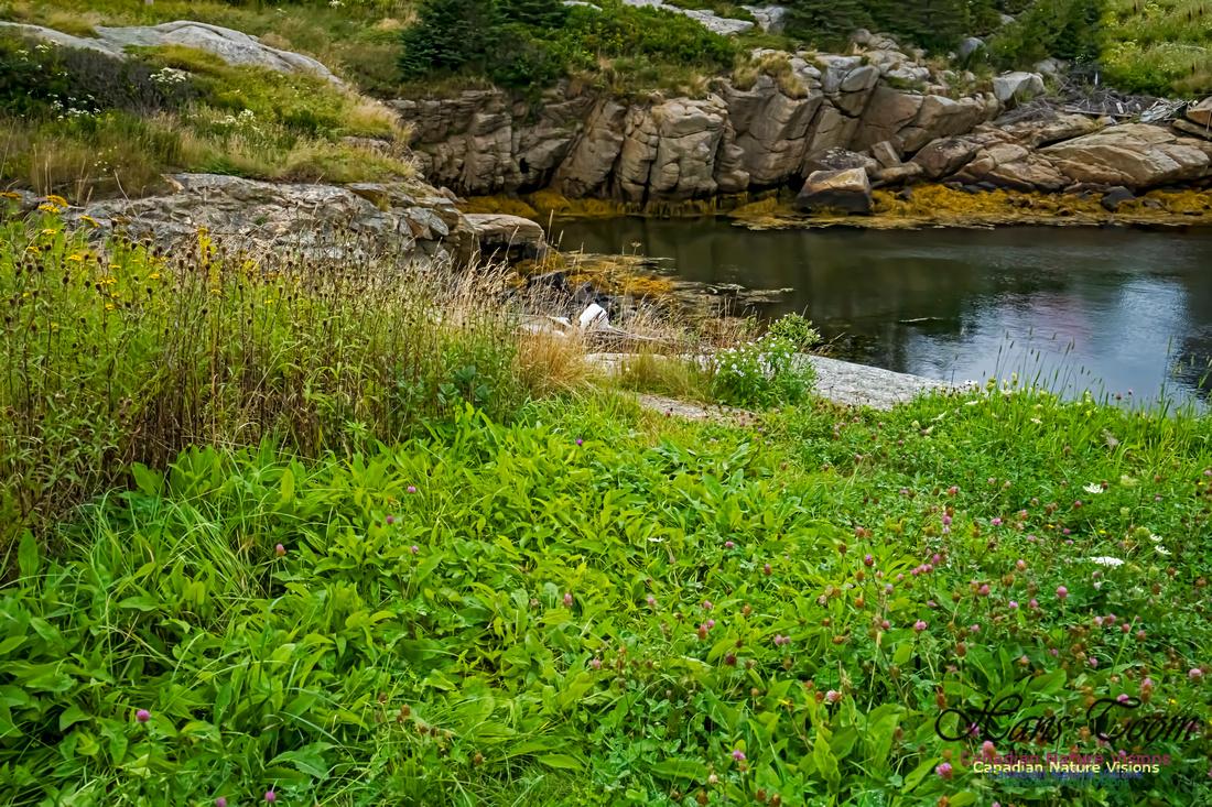 Portuguese Cove 101