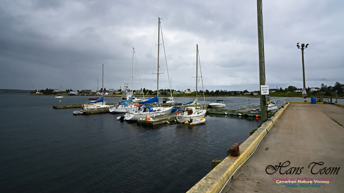 Sambro Harbour 100