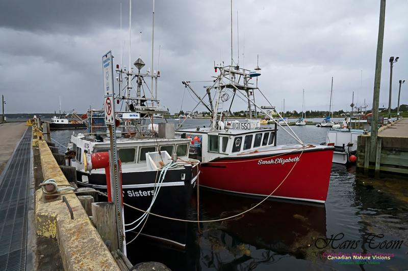 Sambro Harbour 102