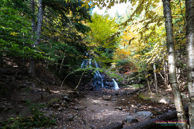 Wentworth Falls 100