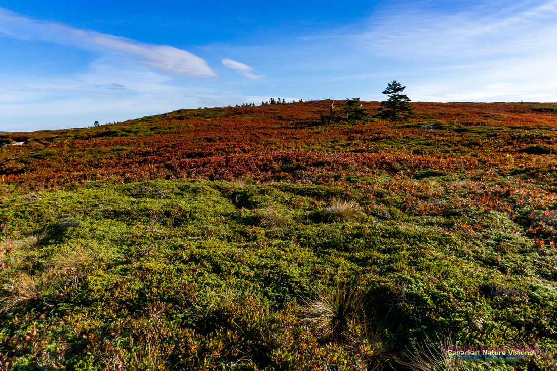 Another Morning Stroll on the Coastal Barrens 122