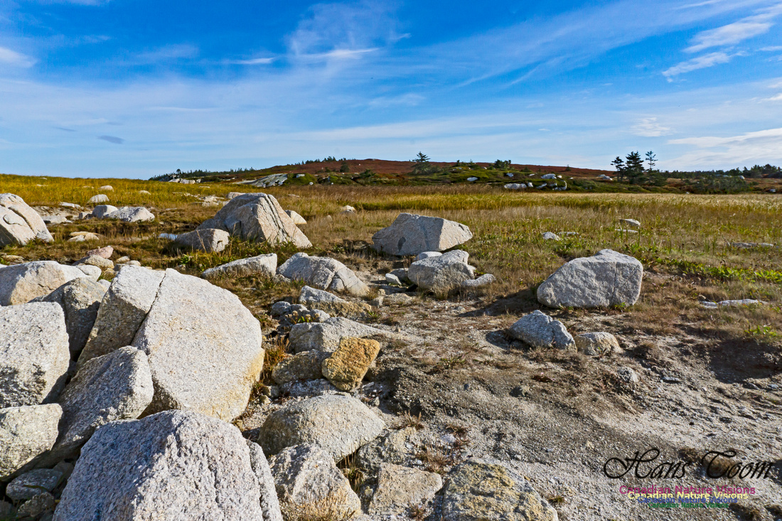 Another Morning Stroll on the Coastal Barrens 102