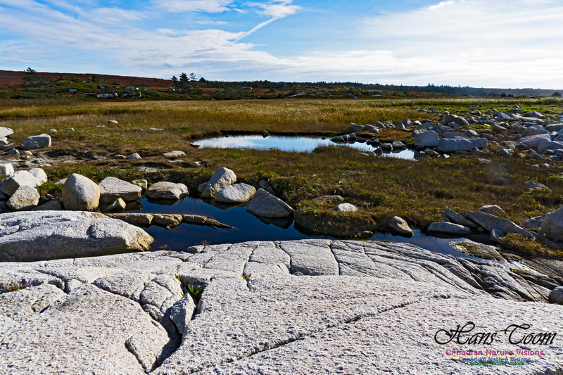 Another Morning Stroll on the Coastal Barrens 109
