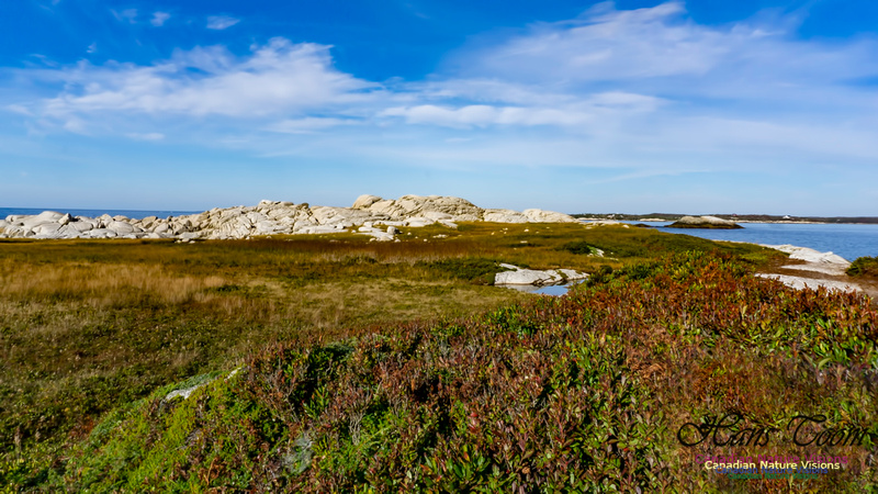 Another Morning Stroll on the Coastal Barrens 117