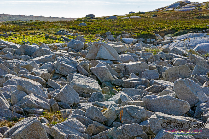 Another Morning Stroll on the Coastal Barrens 115