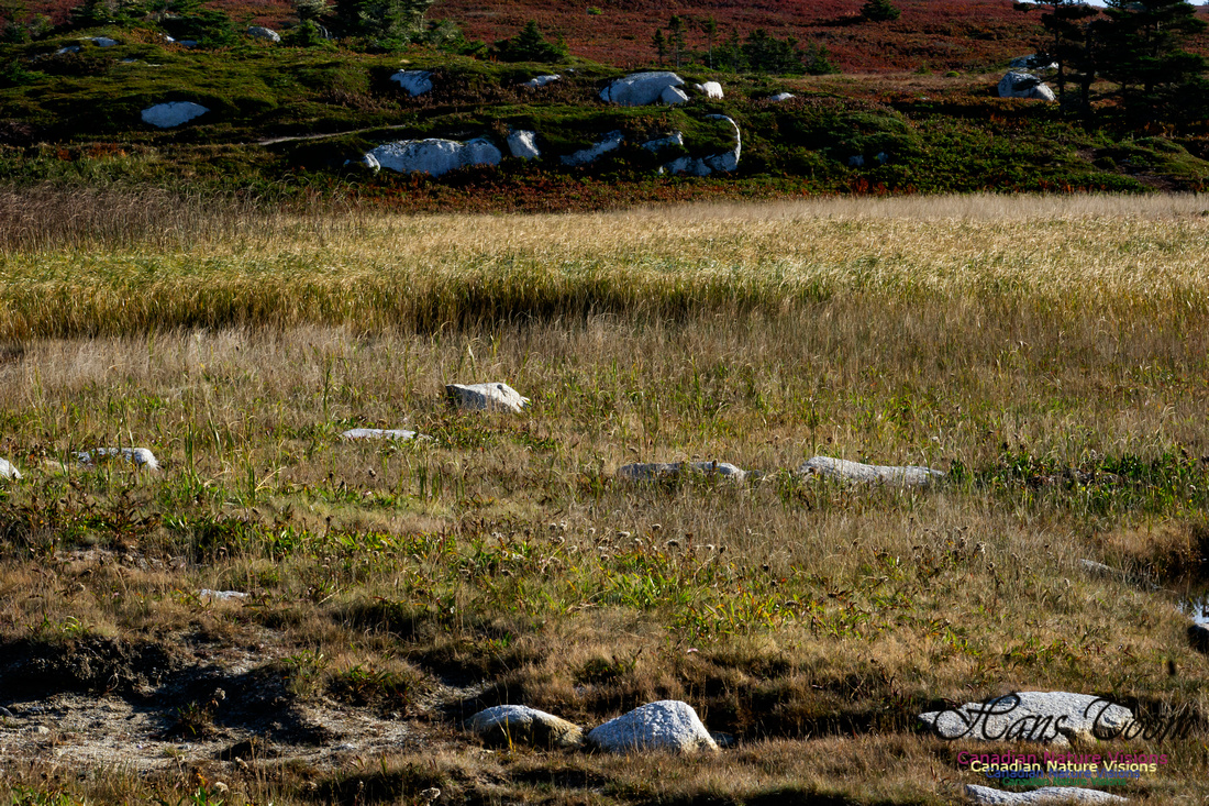 Another Morning Stroll on the Coastal Barrens 114