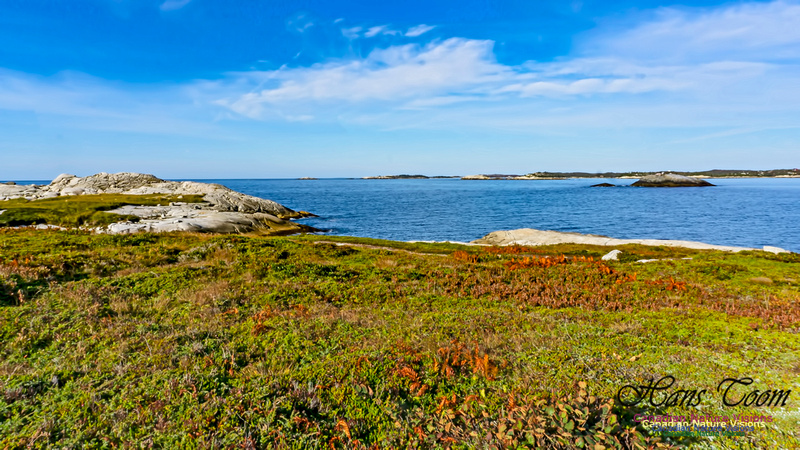 Another Morning Stroll on the Coastal Barrens 119