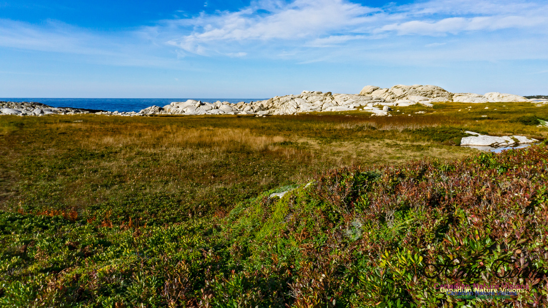 Another Morning Stroll on the Coastal Barrens 118