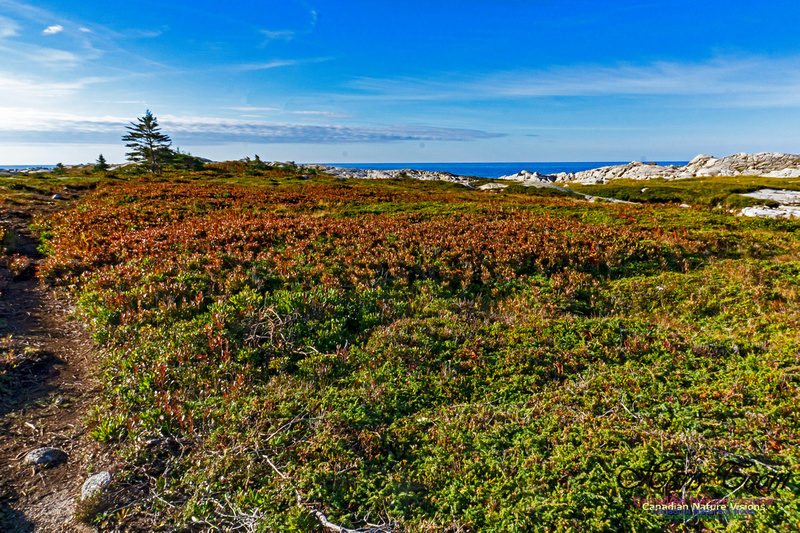 Another Morning Stroll on the Coastal Barrens 120