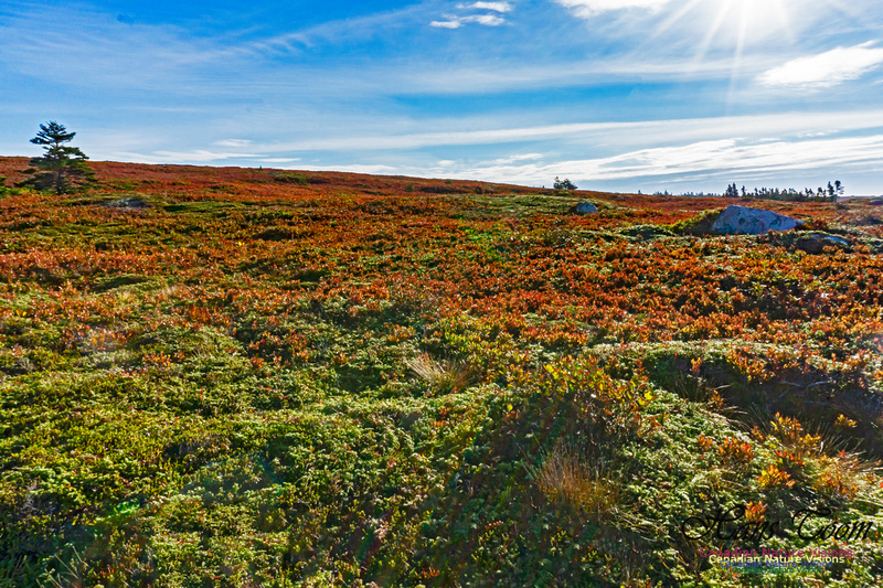 Another Morning Stroll on the Coastal Barrens 121