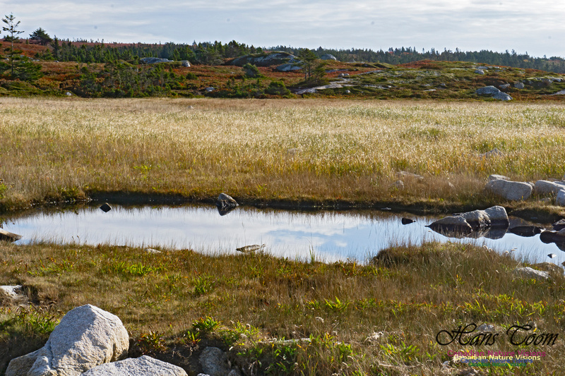 Another Morning Stroll on the Coastal Barrens 107