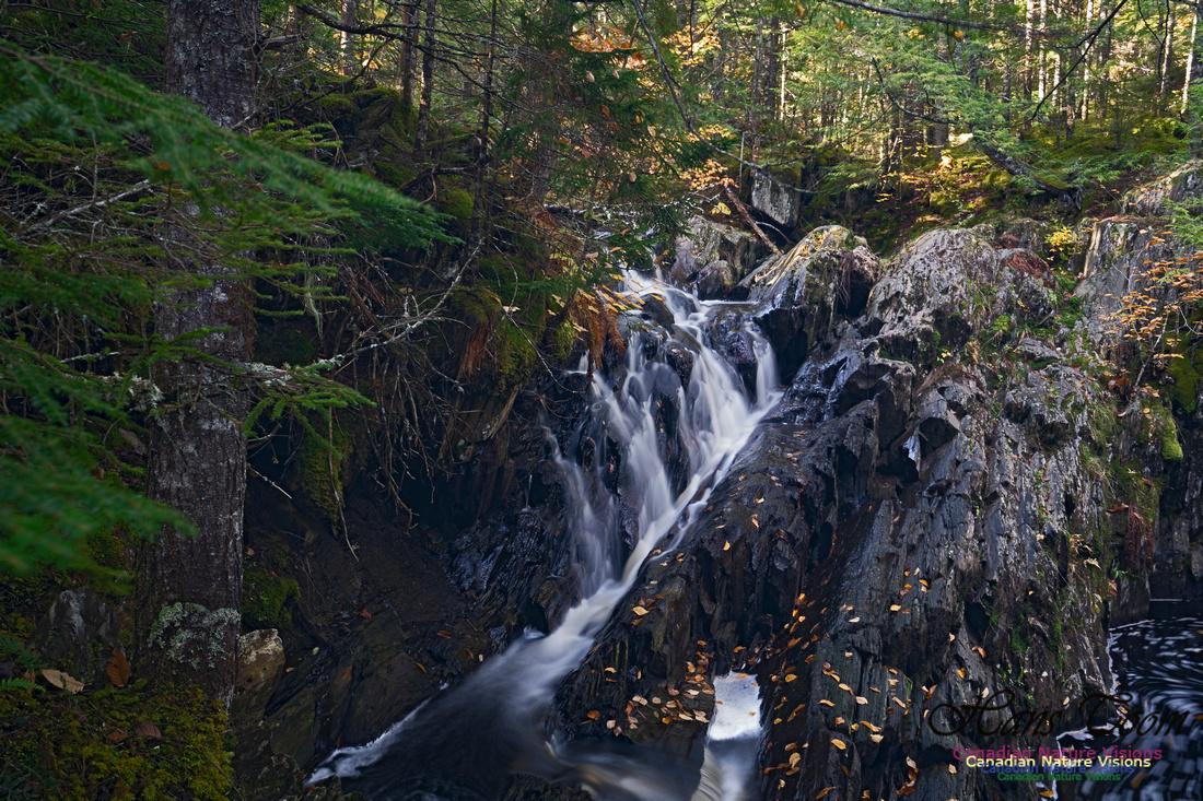 Nuttall Brook Falls 109