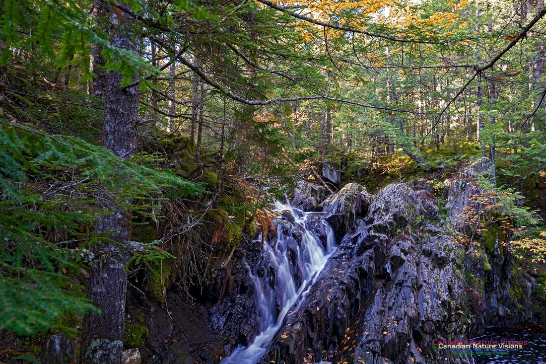 Nuttall Brook Falls 113