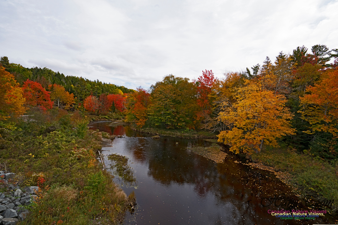 Fall Colours and Reflections 102