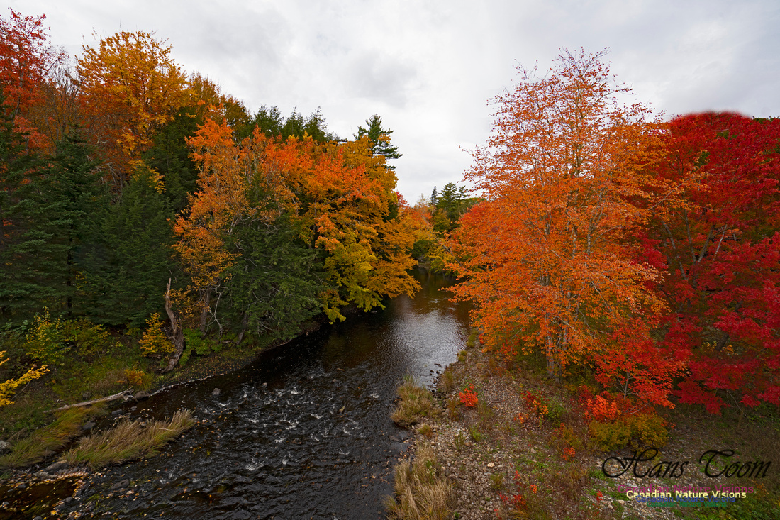 Fall Colours and Reflections 104