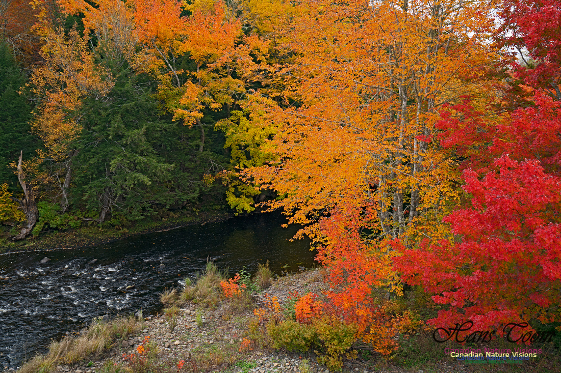 Fall Colours and Reflections 106