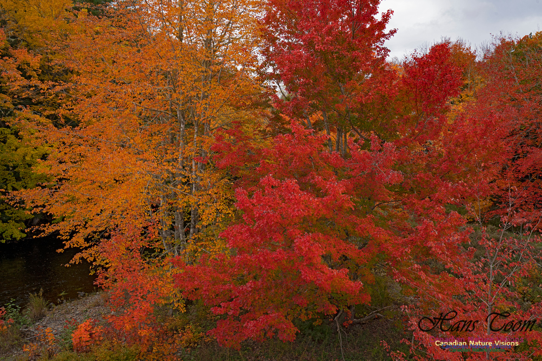 Fall Colours and Reflections 107