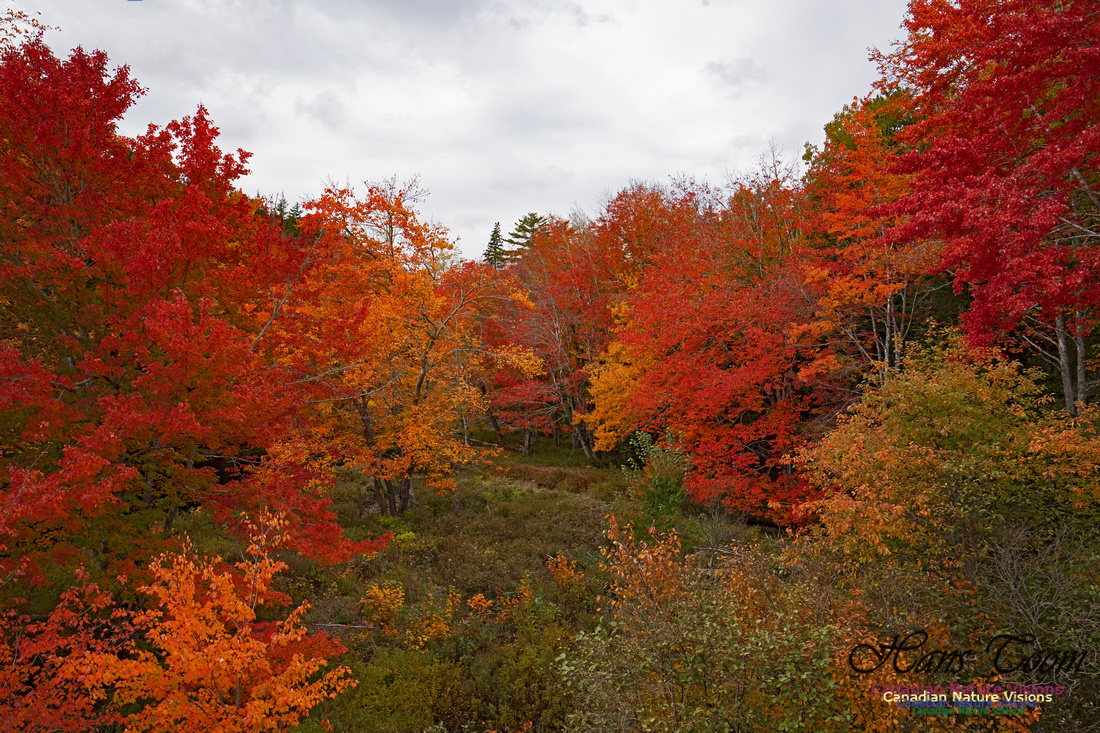 Fall Colours and Reflections 110
