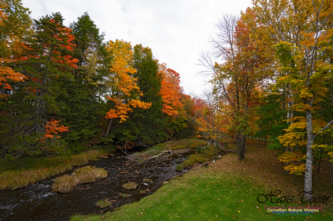 Fall Colours and Reflections 115