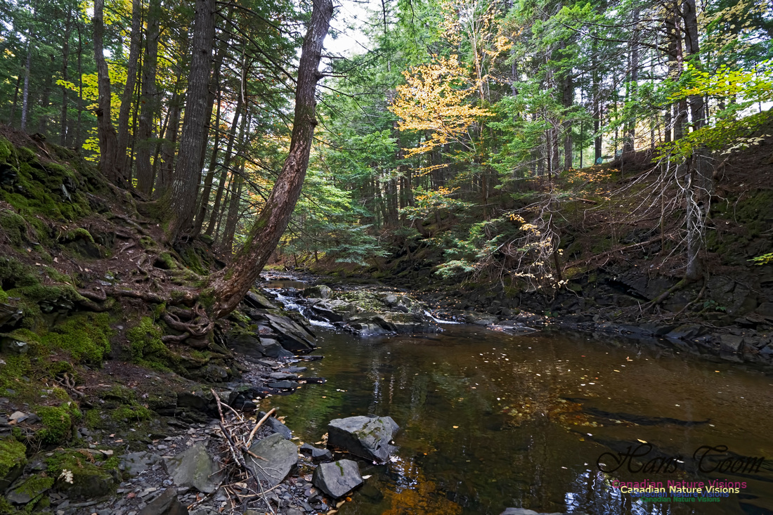 Fall Colours and Reflections 120