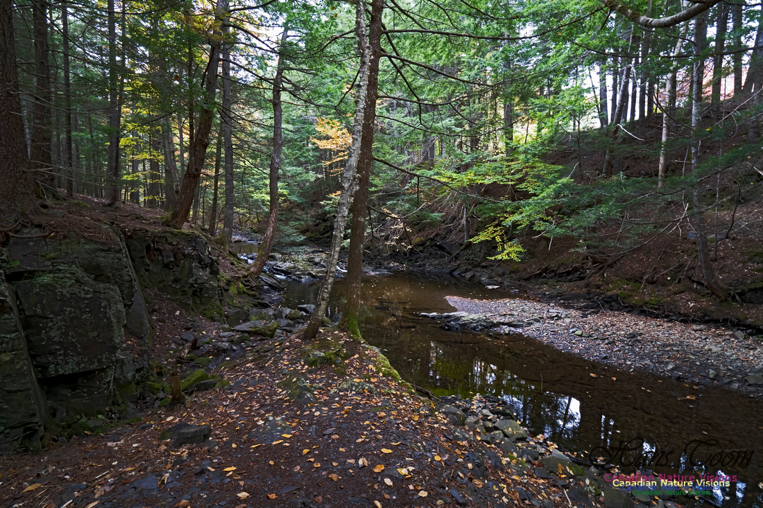 Fall Colours and Reflections 122