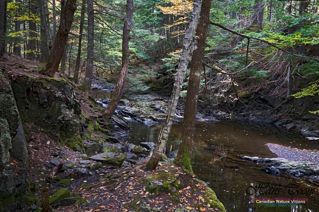 Fall Colours and Reflections 123