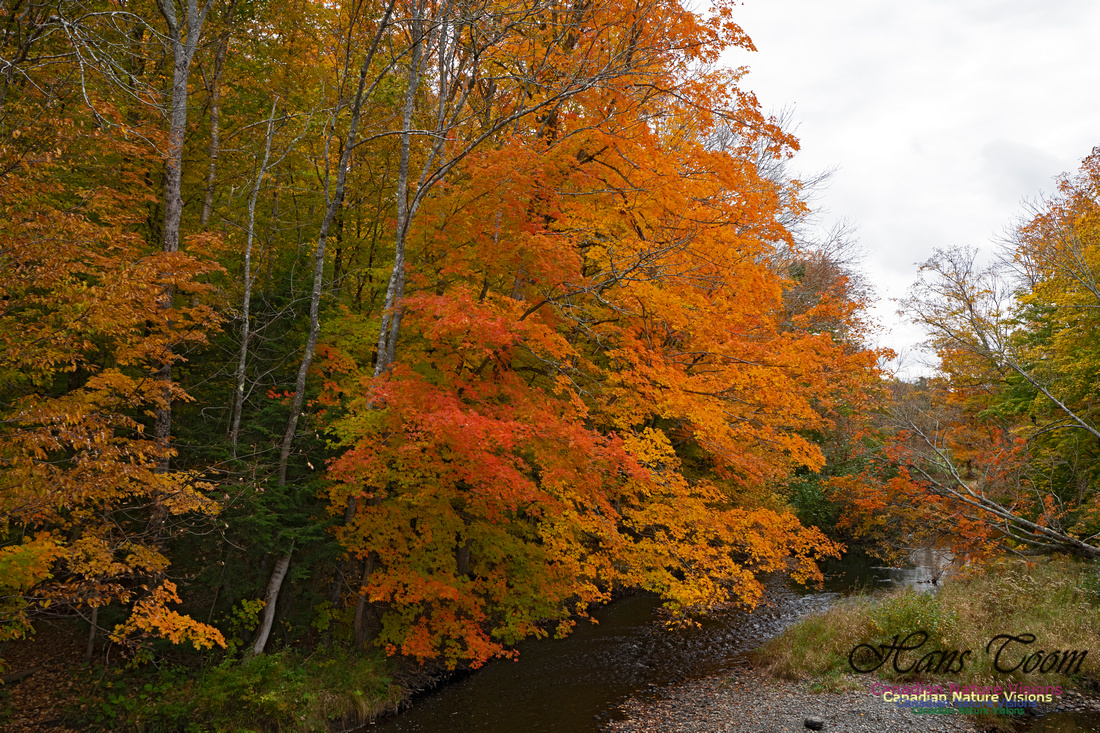 Fall Colours and Reflections 124