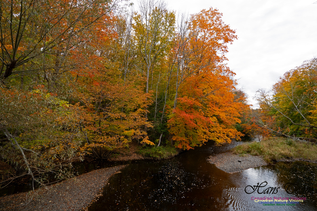 Fall Colours and Reflections 125