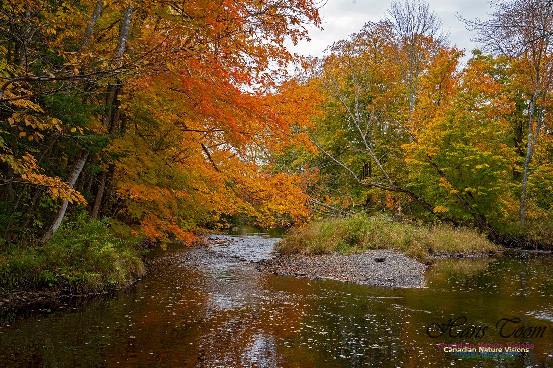 Fall Colours and Reflections 129