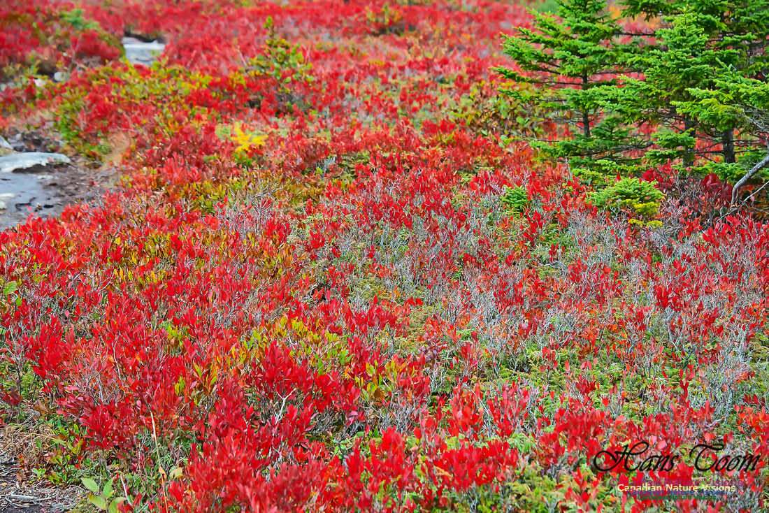 Fall Colours on the Barrens 100