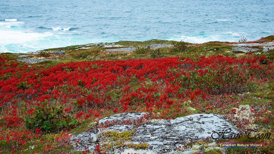 Fall Colours on the Barrens 102