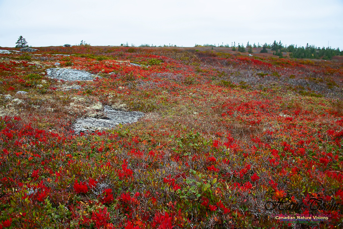 Fall Colours on the Barrens 105