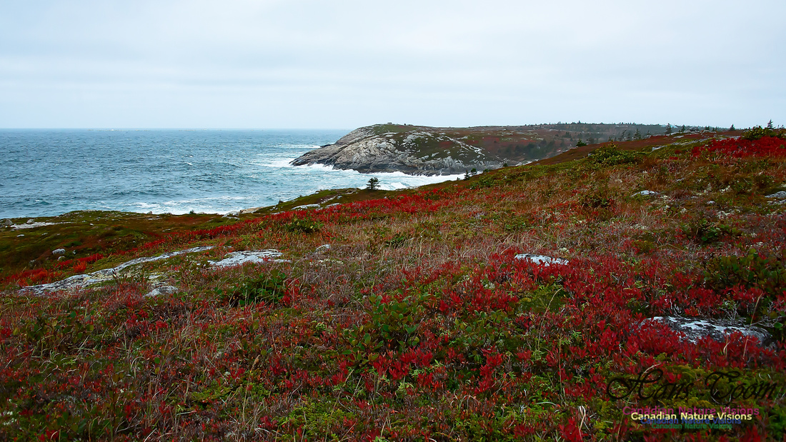 Fall Colours on the Barrens 107