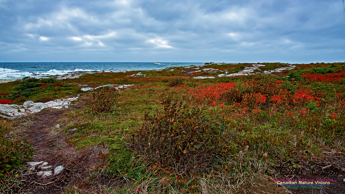 Fall Colours on the Barrens 110