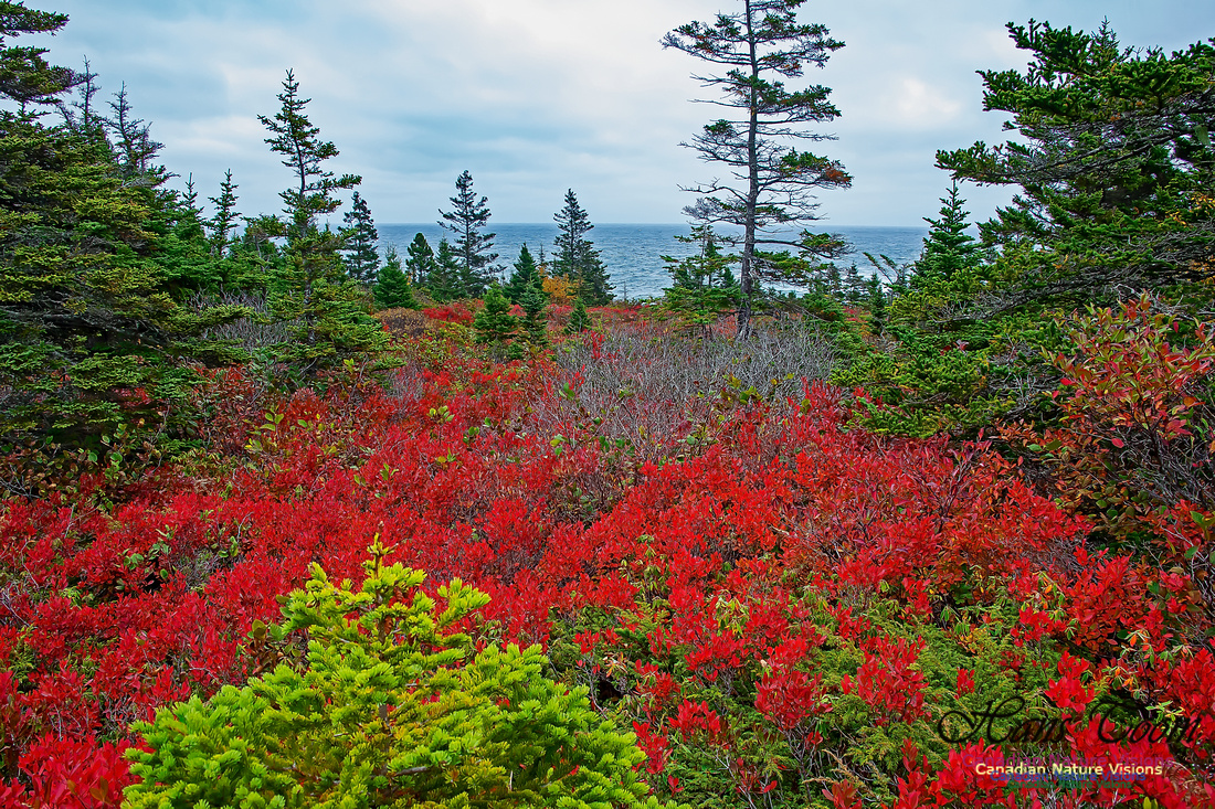 Fall Colours on the Barrens 113