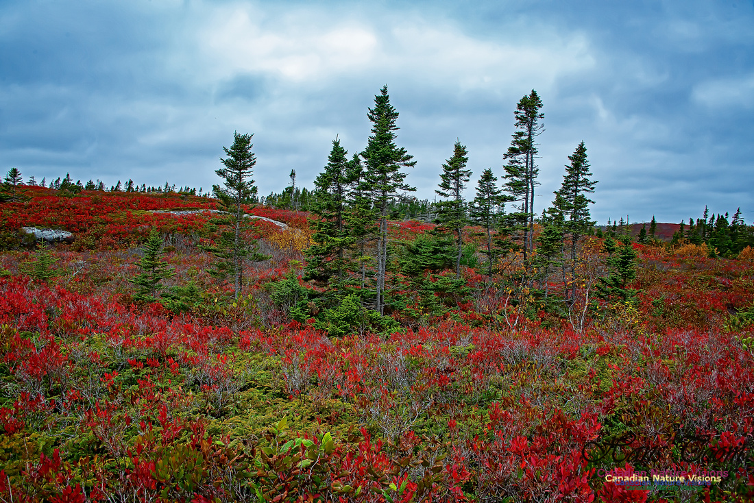 Fall Colours on the Barrens 114