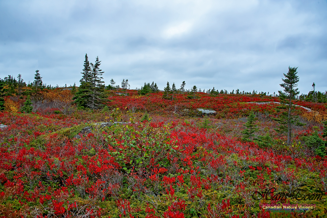 Fall Colours on the Barrens 115