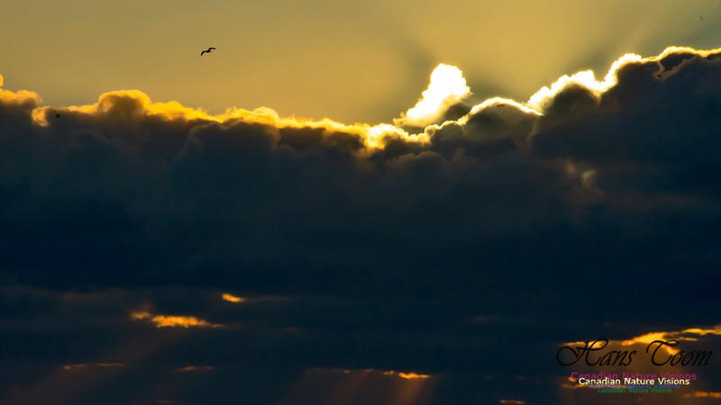Sunrise 2020-11-19 106